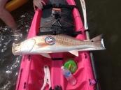 75. Redfish Measure 1