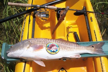 Winning Redfish 2013 Curtis Cleary